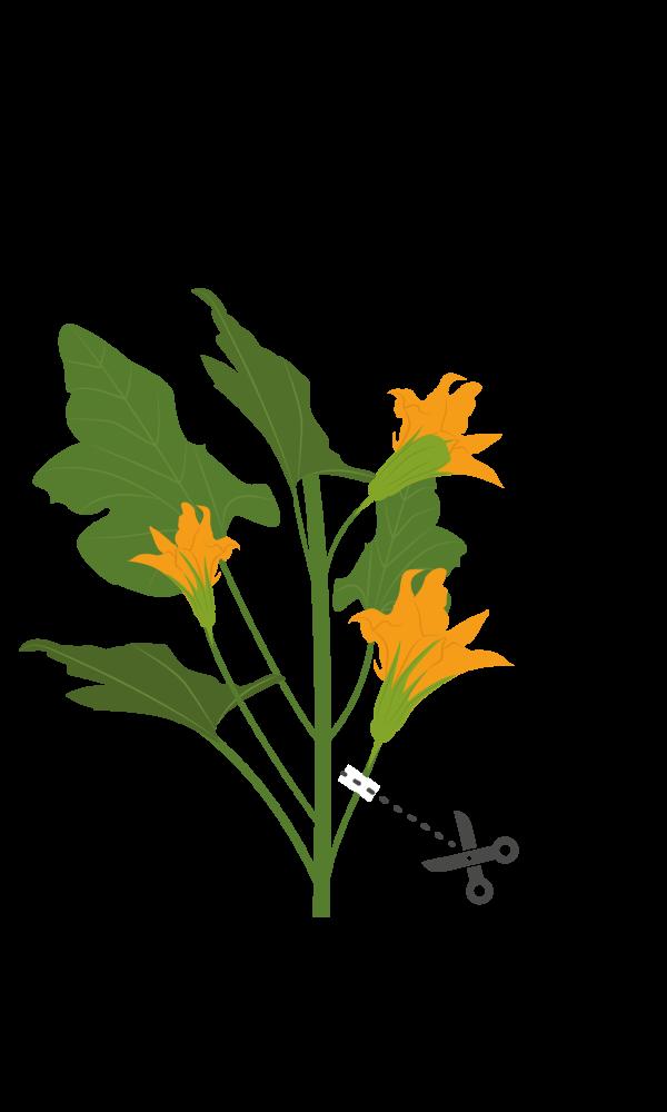 112019 fleur de courgette coupe Марка: VERITABLE <br />Модел: VLIN-F5-Cou015<br />Доставка: 2-4 работни дни<br />Гаранция: 2 години