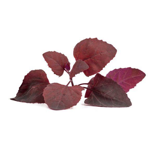 red arroch arroche rouge scaled Марка: VERITABLE <br />Модел: VLIN-J10-Arr046<br />Доставка: 2-4 работни дни<br />Гаранция: 2 години
