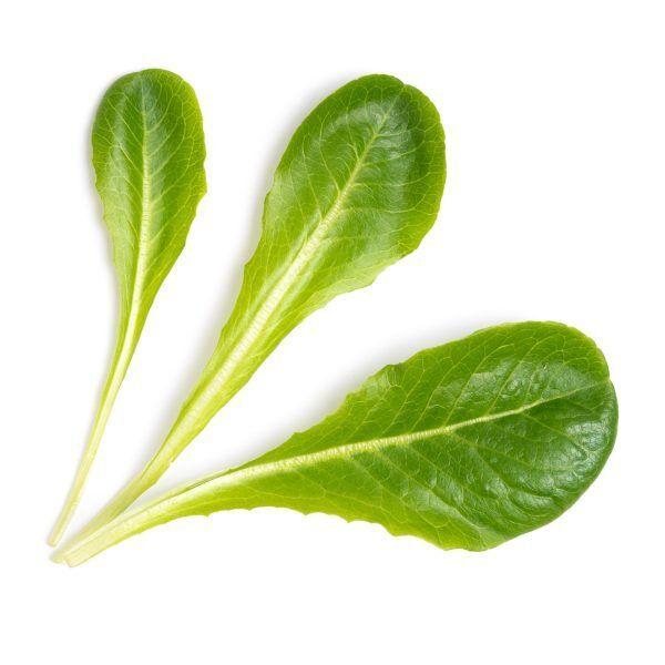 romaine lettuce laitue romaine scaled Марка: VERITABLE <br />Модел: VLIN-J10-Lai050<br />Доставка: 2-4 работни дни<br />Гаранция: 2 години