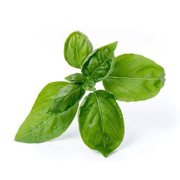 sweet basil basilic grand vert scaled Марка: VERITABLE <br />Модел: VLIN-A10-Bas001<br />Доставка: 2-4 работни дни<br />Гаранция: 2 години