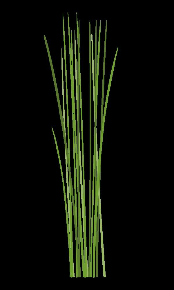 ciboulette ciboulette chinoise Марка: VERITABLE <br />Модел: VLIN-A10-Cib004<br />Доставка: 2-4 работни дни<br />Гаранция: 2 години