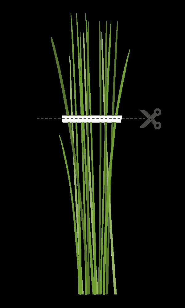 ciboulette ciboulette chinoise coupe Марка: VERITABLE <br />Модел: VLIN-A10-Cib004<br />Доставка: 2-4 работни дни<br />Гаранция: 2 години
